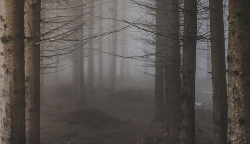 Crítica: Forest