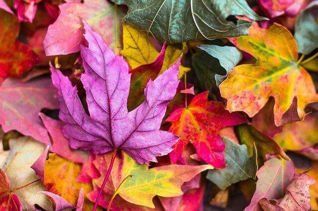 barcelona otoño