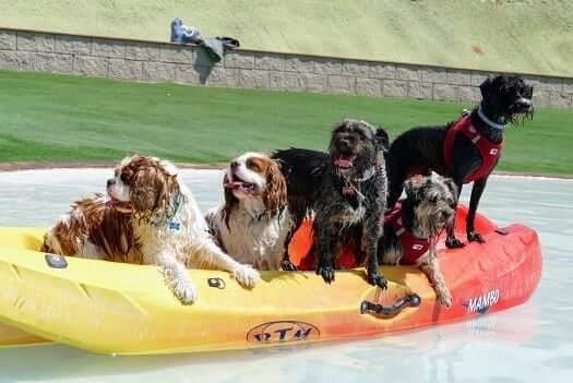 sitios para ir con perros